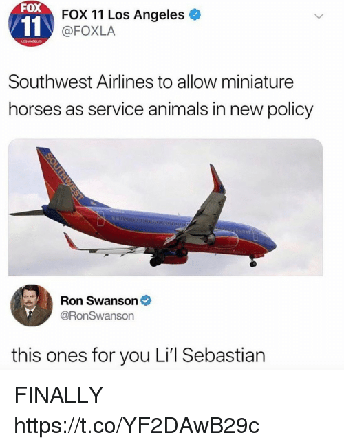 Animals, Funny, and Horses: FOX  FOX 11 Los Angeles  @FOXLA  LOS ANGELES  Southwest Airlines to allow miniature  horses as service animals in new policy  Ron Swanson *  @RonSwanson  this ones for you Li'l Sebastian FINALLY https://t.co/YF2DAwB29c