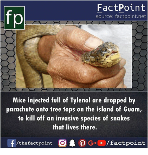 parachute: fp  FactPoint  source: factpoint.net  Mice injected ul of Tylenol are dropped by  parachute onto tree tops on the island of Guam  to kill off an invasive species of snakes  that lives there.