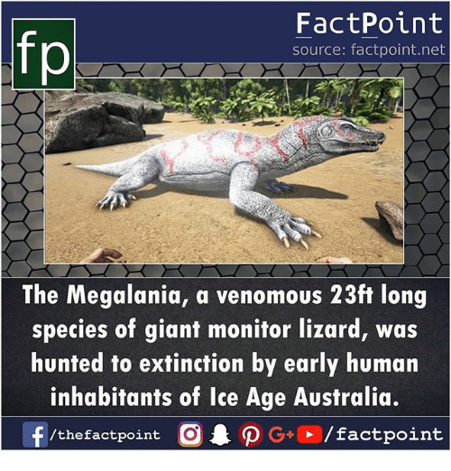 Hunted: fp  FactPoint  source: factpoint.net  The Megalania, a venomous 23ft long  species of giant monitor lizard, was  hunted to extinction by early human  inhabitants of Ice Age Australia.  /thefactpoint O
