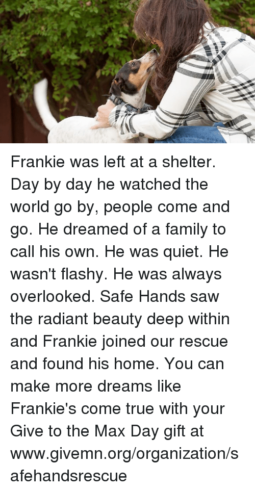 hand saw: Frankie was left at a shelter.  Day by day he watched the world go by, people come and go.  He dreamed of a family to call his own.  He was quiet.  He wasn't flashy.  He was always overlooked.  Safe Hands saw the radiant beauty deep within and Frankie joined our rescue and found his home.  You can make more dreams like Frankie's come true with your Give to the Max Day gift at www.givemn.org/organization/safehandsrescue