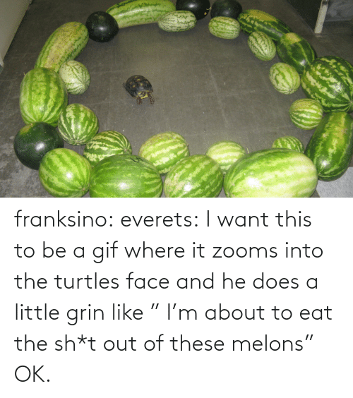 "Sh T: franksino: everets:  I want this to be a gif where it zooms into the turtles face and he does a little grin like "" I'm about to eat the sh*t out of these melons""  OK."