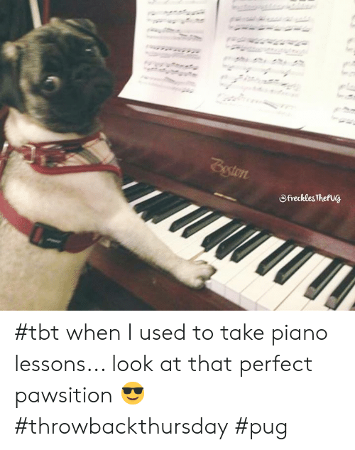 Memes, Tbt, and Piano: @frecklesThefu@ #tbt when I used to take piano lessons... look at that perfect pawsition 😎 #throwbackthursday #pug