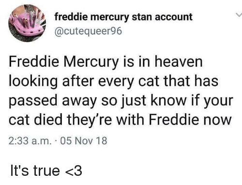 Heaven, Memes, and Stan: freddie mercury stan account  @cutequeer96  Freddie Mercury is in heaven  looking after every cat that has  passed away so just know if your  cat died they're with Freddie now  2:33 a.m. 05 Nov 18 It's true <3