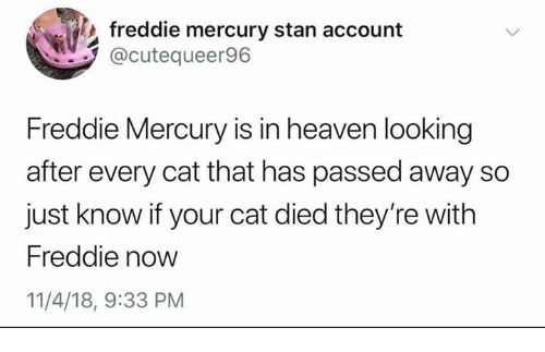Heaven, Stan, and Mercury: freddie mercury stan account  @cutequeer96  Freddie Mercury is in heaven looking  after every cat that has passed away so  just know if your cat died they're with  Freddie now  11/4/18, 9:33 PM