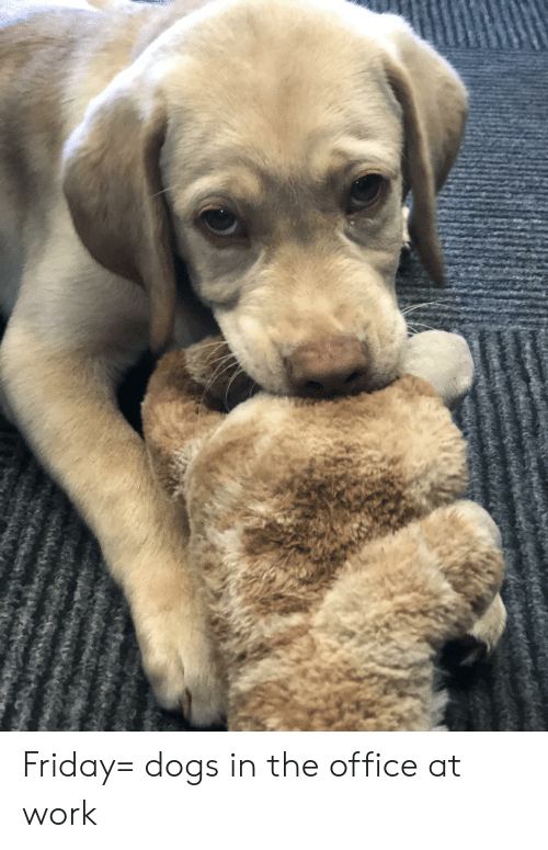 Dogs, Friday, and The Office: Friday= dogs in the office at work