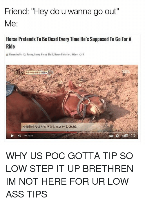 "Ass, Funny, and Horse: Friend: ""Hey do u wanna go out""  Me  Horse Pretends To Be Dead Every Time He's Supposed To Go For A  Ride  Horseaholic Co Funny. Funny Horse Stuff, Horse Behavior. Video D9  1 45/315 WHY US POC GOTTA TIP SO LOW STEP IT UP BRETHREN IM NOT HERE FOR UR LOW ASS TIPS"