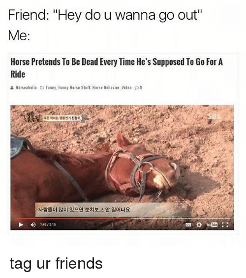"Friends, Funny, and Memes: Friend: ""Hey do u wanna go out""  Me  Horse Pretends To Be Dead Every Time He's Supposed To Go For A  Ride  Horseaholic Co Funny Funny Horse Stuff. Horse Behavior. Video D9  12451315 tag ur friends"