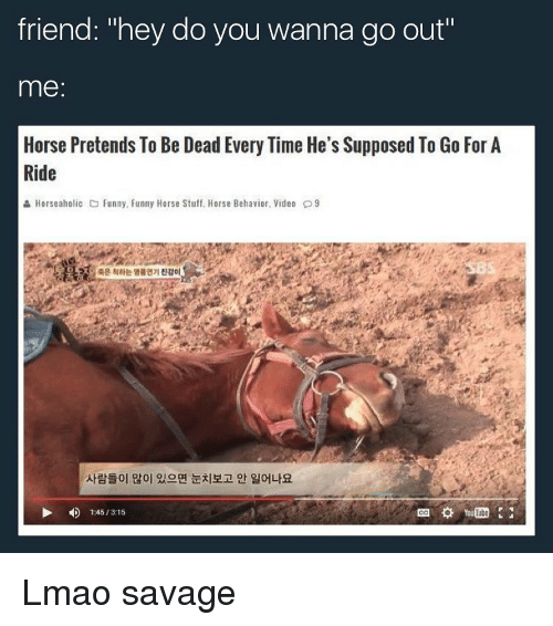 "Funny, Horses, and Horse: friend: ""hey do you wanna go out""  me  Horse Pretends To Be Dead Every Time He's Supposed To Go For A  Ride  & Horseaholic C Funny. Funny Horse Stuff. Horse Behavior. Video D9  1345/ 315 Lmao savage"