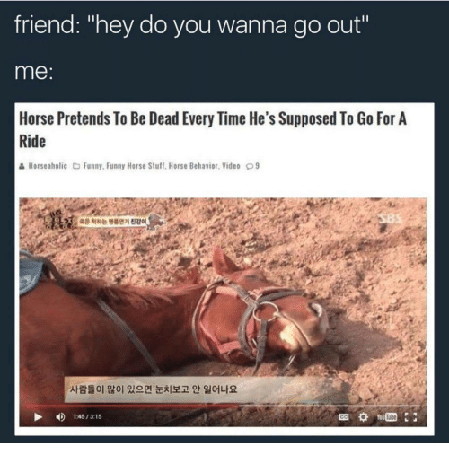 "Funny, Horse, and Stuff: friend: ""hey do you wanna go out""  me:  Horse Pretends To Be Dead Every Time He's Supposed To Go For A  Ride  & Horseaholic Funny, Funny Horse Stuff. Horse Behavior. Video 9  온척하는 명를연기진감。  사람들이 많이 있으면 눈치보고 안 일어나요  4)  1:45 / 315  Tube  GO"
