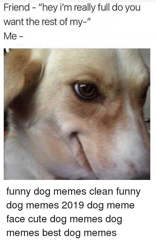 ️ 25+ Best Memes About Dog Memes Clean Funny | Dog Memes ...