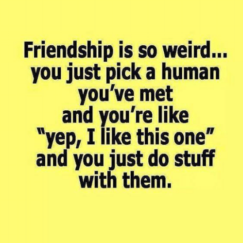 """Dank, Weird, and Stuff: Friendship is so weird...  you just pick a humarn  you've met  and you're like  """"yep, I like this one""""  and you just do stuff  with them."""