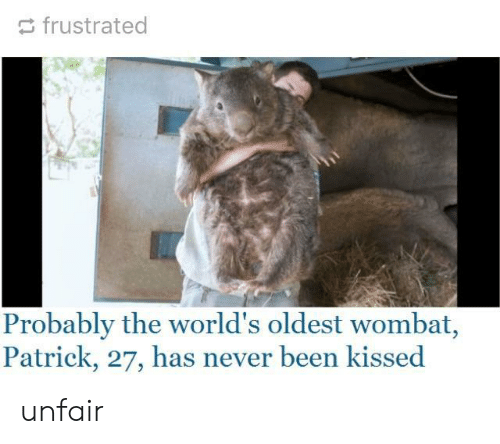 Worlds Oldest: frustrated  Probably the world's oldest wombat,  Patrick, 27, has never been kissed unfair