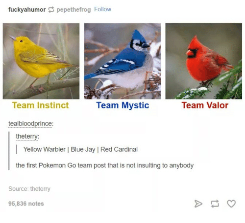 Blue Jay: fuckyahumor pepethefrog Follow  Team Valor  Team Instinct  Team Mystic  teal bloodprince  the terry:  Yellow Warbler Blue Jay IRed Cardinal  the first Pokemon Go team post that is not insulting to anybody  Source the terry  95,836 notes