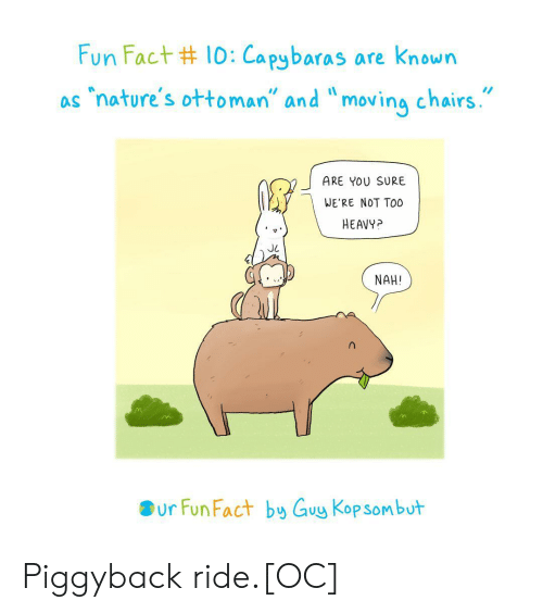 """Ottoman, Fun, and You: Fun Fact #10:Capybaras are known  """"nature's ottoman"""" and """"moving chairs.  as  ARE YOU SURE  WE'RE NOT TO0  HEAVY?  NAH!  ur Fun Fact by Guy Kop sombut Piggyback ride.[OC]"""