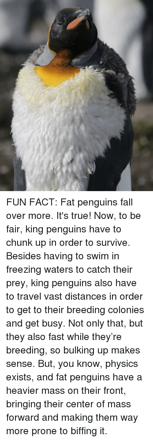 Physicic: FUN FACT: Fat penguins fall over more. It's true! Now, to be fair, king penguins have to chunk up in order to survive. Besides having to swim in freezing waters to catch their prey, king penguins also have to travel vast distances in order to get to their breeding colonies and get busy. Not only that, but they also fast while they're breeding, so bulking up makes sense. But, you know, physics exists, and fat penguins have a heavier mass on their front, bringing their center of mass forward and making them way more prone to biffing it.