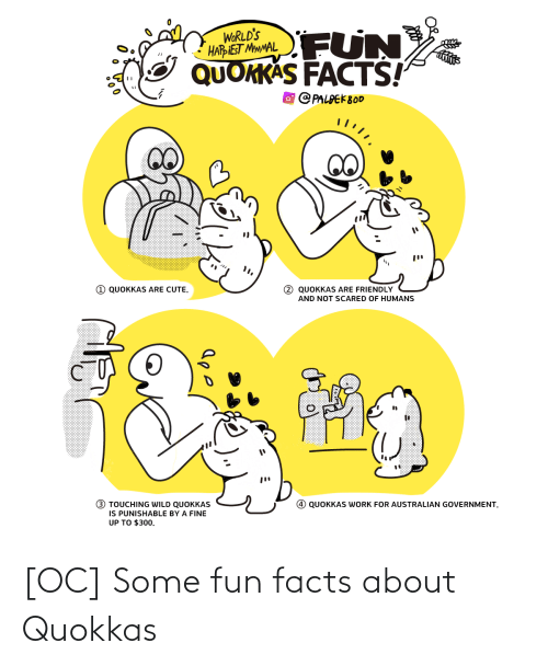 humans: FUN  WORLD'S  HARIEST MMMAL  QUOKKAS FACTS!  O PALPEK800  1 QUOKKAS ARE CUTE.  2 QUOKKAS ARE FRIENDLY  AND NOT SCARED OF HUMANS  (!)  3 TOUCHING WILD QUOKKAS  IS PUNISHABLE BY A FINE  UP TO $300.  QUOKKAS WORK FOR AUSTRALIAN GOVERNMENT. [OC] Some fun facts about Quokkas