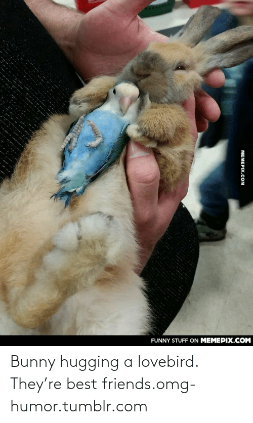 lovebird: FUNNY STUFF ON MEMEPIX.COM  МЕМЕРIХ.Сом Bunny hugging a lovebird. They're best friends.omg-humor.tumblr.com
