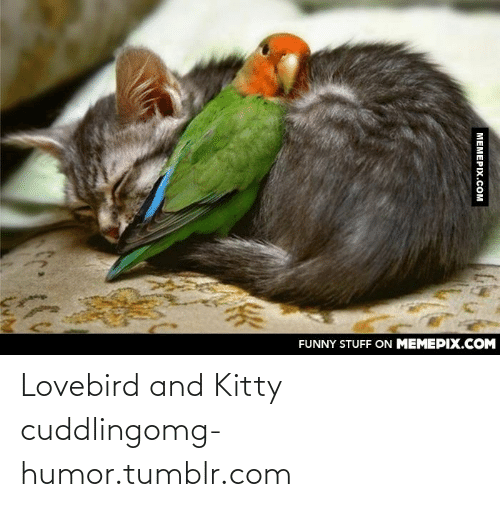 lovebird: FUNNY STUFF ON MEMEPIX.COM  МЕМЕРIХ.Сом Lovebird and Kitty cuddlingomg-humor.tumblr.com