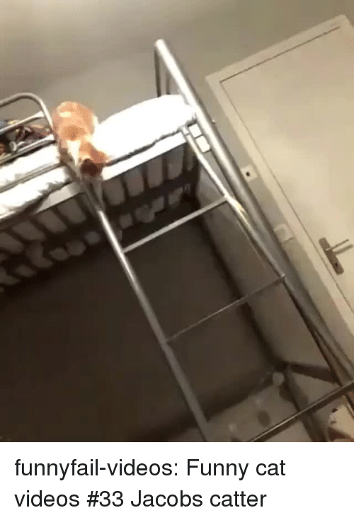 funny cat: funnyfail-videos:  Funny cat videos #33  Jacobs catter