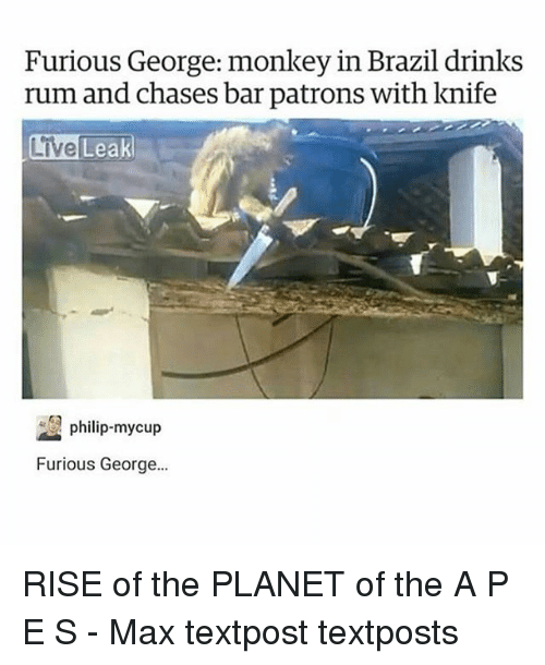 Memes, Brazil, and Live: Furious George: monkey in Brazil drinks  rum and chases bar patrons with knife  Live  Leak  up  Furious George... RISE of the PLANET of the A P E S - Max textpost textposts