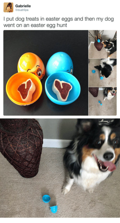 Easter, Dog, and Easter Egg: Gabrielle  duahlipa  l put dog treats in easter eggs and then my dog  went on an easter egg hunt