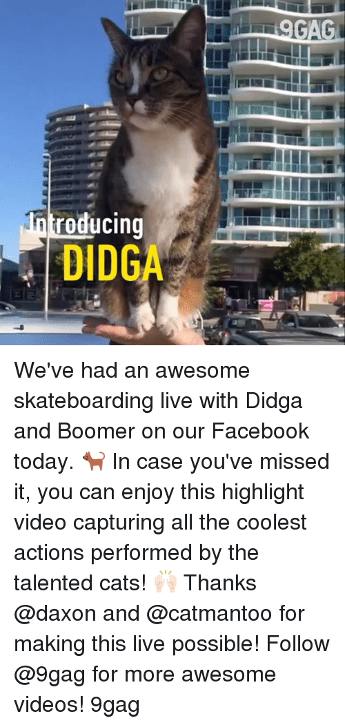 9gag, Cats, and Facebook: GAG  roducing  DIDGA We've had an awesome skateboarding live with Didga and Boomer on our Facebook today. 🐈 In case you've missed it, you can enjoy this highlight video capturing all the coolest actions performed by the talented cats! 🙌🏻 Thanks @daxon and @catmantoo for making this live possible! Follow @9gag for more awesome videos! 9gag