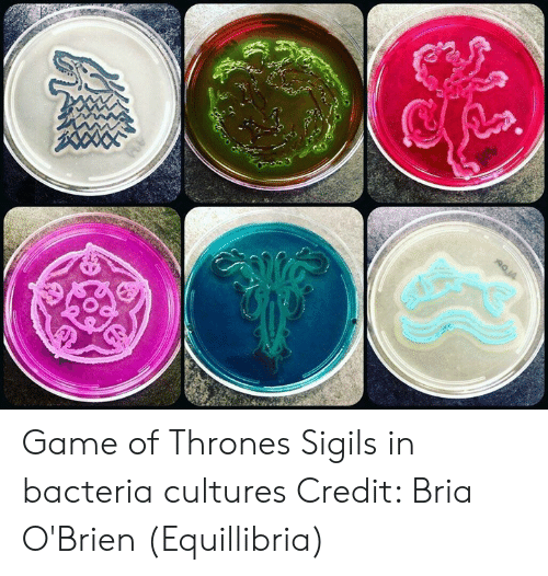 Game of Thrones, Memes, and Game: Game of Thrones Sigils in bacteria cultures  Credit: Bria O'Brien (Equillibria)