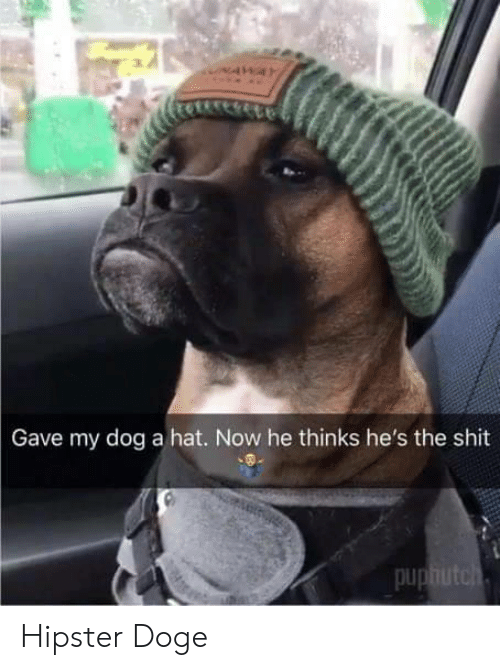Doge: Gave my dog a hat. Now he thinks he's the shit  pu Hipster Doge