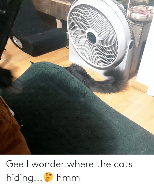 gee: Gee I wonder where the cats hiding...🤔 hmm