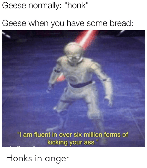 """bread: Geese normally: """"honk""""  Geese when you have some bread:  """"I am fluent in over six million forms of  kicking your ass. Honks in anger"""