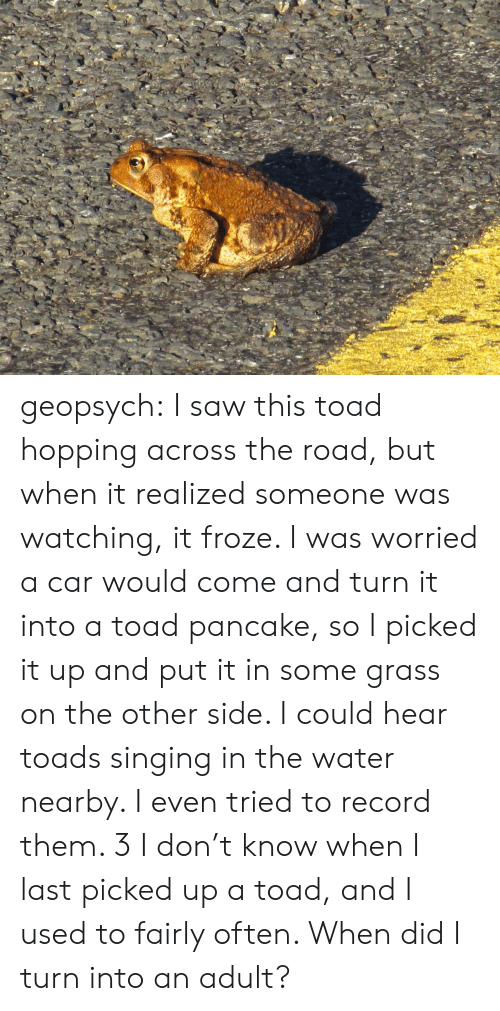 Saw, Singing, and Target: geopsych: I saw this toad hopping across the road, but when it realized someone was watching, it froze. I was worried a car would come and turn it into a toad pancake, so I picked it up and put it in some grass on the other side. I could hear toads singing in the water nearby. I even tried to record them. 3 I don't know when I last picked up a toad, and I used to fairly often. When did I turn into an adult?