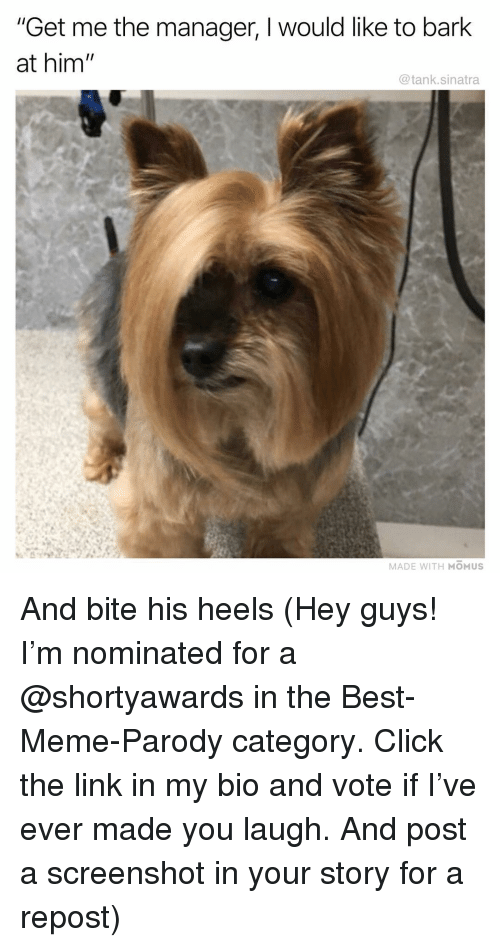 "Click The: ""Get me the manager, I would like to bark  at him  @tank.sinatra  MADE WITH MOMUS And bite his heels (Hey guys! I'm nominated for a @shortyawards in the Best-Meme-Parody category. Click the link in my bio and vote if I've ever made you laugh. And post a screenshot in your story for a repost)"
