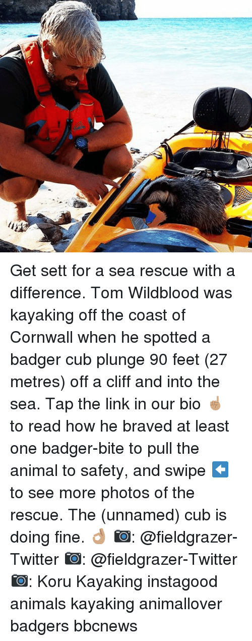 into-the-sea: Get sett for a sea rescue with a difference. Tom Wildblood was kayaking off the coast of Cornwall when he spotted a badger cub plunge 90 feet (27 metres) off a cliff and into the sea. Tap the link in our bio ☝🏽 to read how he braved at least one badger-bite to pull the animal to safety, and swipe ⬅️ to see more photos of the rescue. The (unnamed) cub is doing fine. 👌🏽 📷: @fieldgrazer-Twitter 📷: @fieldgrazer-Twitter 📷: Koru Kayaking instagood animals kayaking animallover badgers bbcnews