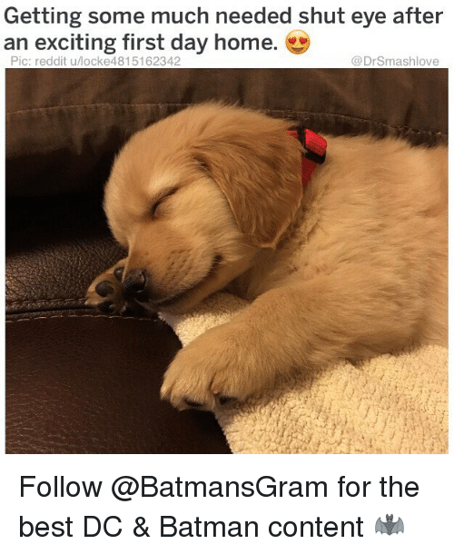 Batman, Memes, and Reddit: Getting some much needed shut eye after  an exciting first day home.  Pic: reddit u/locke4815162342  @DrSmashlove Follow @BatmansGram for the best DC & Batman content 🦇