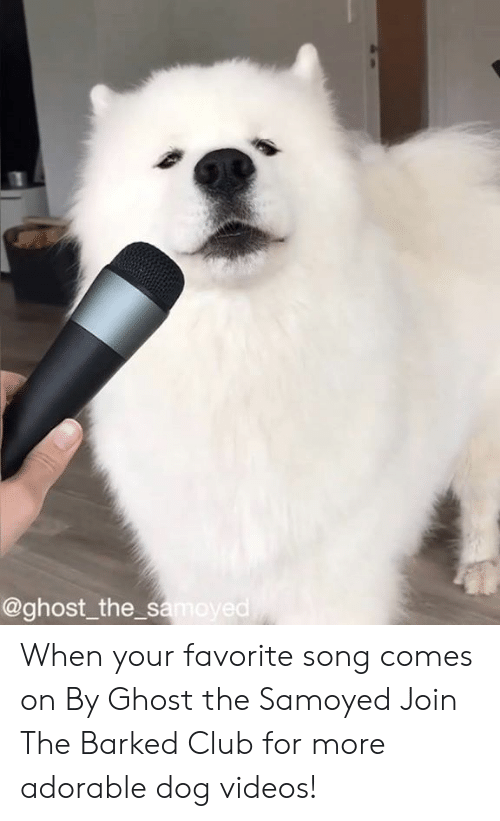 The S: @ghost_the s  ed When your favorite song comes on By Ghost the Samoyed  Join The Barked Club for more adorable dog videos!