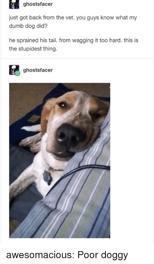 Dumb, Tumblr, and Blog: ghostsfacer  just got back from the vet. you guys know what my  dumb dog did?  he sprained his tail. from wagging it too hard. this is  the stupidest thing  ghostsfacer awesomacious:  Poor doggy