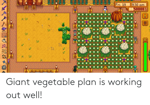 Plan: Giant vegetable plan is working out well!