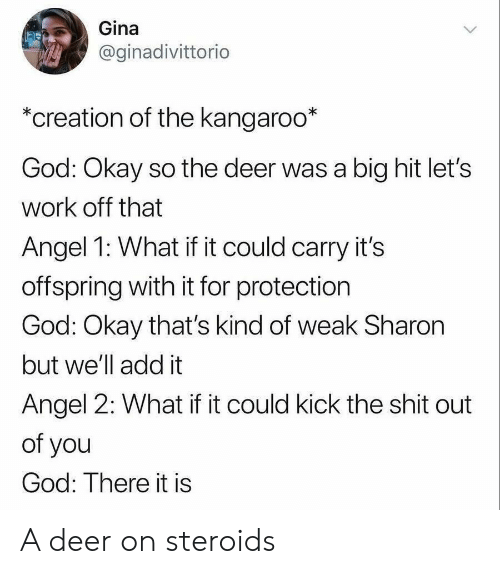 Deer, God, and Shit: Gina  @ginadivittorio  *creation of the kangaroo*  God: Okay so the deer was a big hit let's  work off that  Angel 1: What if it could carry it's  offspring with it for protection  God: Okay that's kind of weak Sharon  but we'll add it  Angel 2: What if it could kick the shit out  of you  God: There it is A deer on steroids