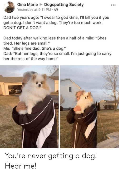 """9/11, Dad, and God: Gina MarieDogspotting Society  Yesterday at 9:11 PM  Dad two years ago: """"I swear to god Gina, 'll kill you if you  get a dog. I don't want a dog. They're too much work.  DON'T GET A DOG.""""  Dad today after walking less than a half of a mile: """"Shes  tired. Her legs are small  Me: """"She's fine dad. She's a dog.""""  Dad: """"But her legs, they're so small. I'm just going to carry  her the rest of the way home"""" You're never getting a dog! Hear me!"""