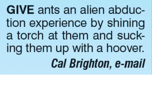 brightons: GIVE ants an alien abduc-  tion experience by shining  a torch at them and suck-  ing them up with a hoover.  Cal Brighton, e-mail