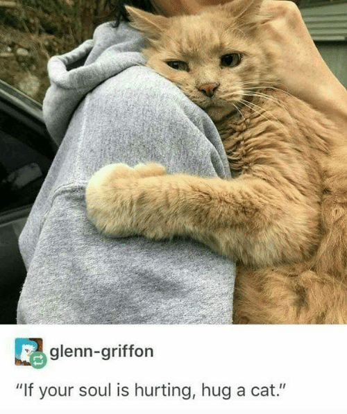 "Cat, Soul, and Hug: glenn-griffon  ""If your soul is hurting, hug a cat."""