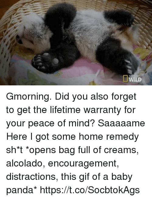 Distractions: Gmorning.  Did you also forget to get the lifetime warranty for your peace of mind? Saaaaame Here I got some home remedy sh*t *opens bag full of creams, alcolado, encouragement, distractions, this gif of a baby panda* https://t.co/SocbtokAgs