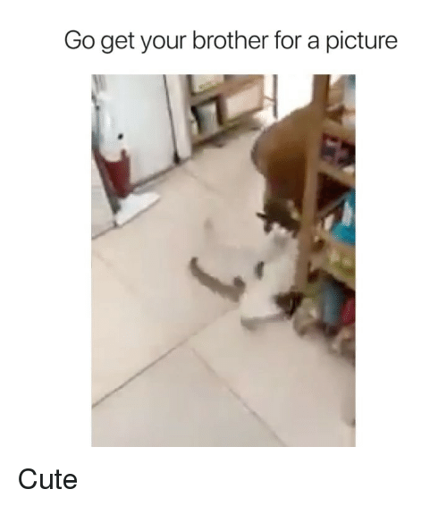 Cute, Memes, and A Picture: Go get your brother for a picture Cute