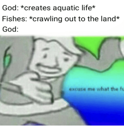 God, Life, and What: God: *creates aquatic life*  Fishes: *crawling out to the land*  God:  excuse me what the fu