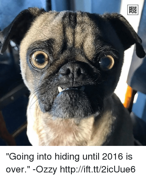 "Ozzies: ""Going into hiding until 2016 is over."" -Ozzy http://ift.tt/2icUue6"