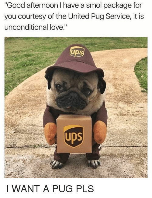 "Pugly: Good afternoon I have a smol package for  you courtesy of the United Pug Service, it is  unconditional love.""  UDS  UDS I WANT A PUG PLS"