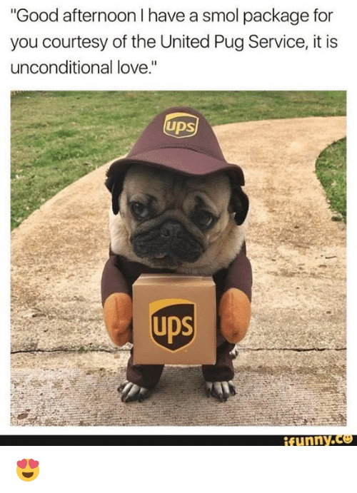 "Pugly: ""Good afternoon I have a smol package for  you courtesy of the United Pug Service, it is  unconditional love.""  Ups  funny.  腳 😍"