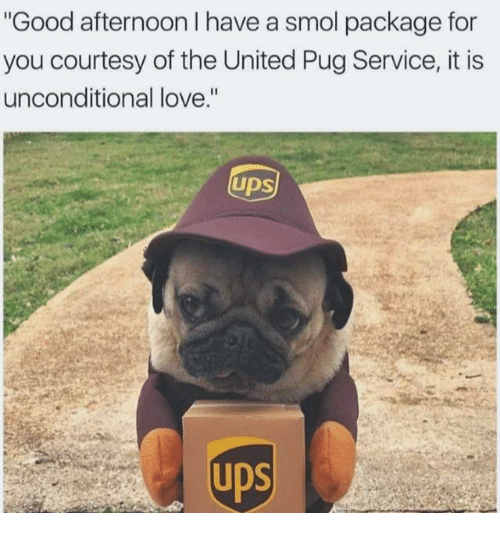 "Pugly: Good afternoon I have a smol package for  you courtesy of the United Pug Service, it is  unconditional love.""  UDS"