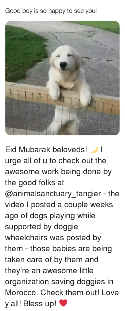 Morocco: Good boy is so happy to see you! Eid Mubarak beloveds! 🌙 I urge all of u to check out the awesome work being done by the good folks at @animalsanctuary_tangier - the video I posted a couple weeks ago of dogs playing while supported by doggie wheelchairs was posted by them - those babies are being taken care of by them and they're an awesome little organization saving doggies in Morocco. Check them out! Love y'all! Bless up! ❤️