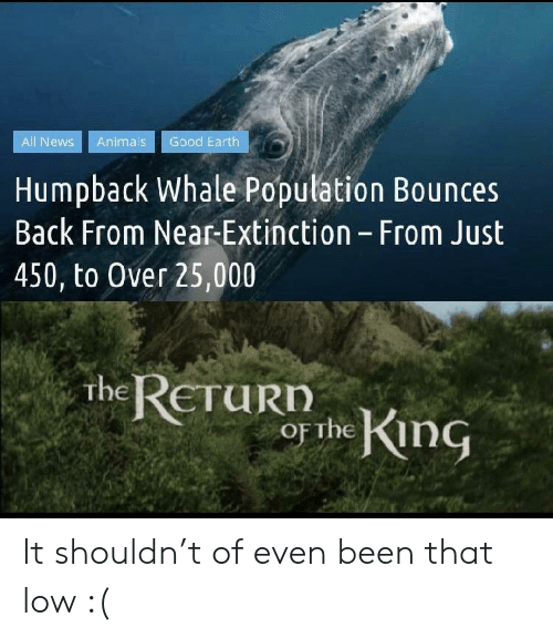 Shouldn: Good Earth  All News  Animals  Humpback Whale Population Bounces  Back From Near-Extinction - From Just  450, to Over 25,000  the RETURD  or the King It shouldn't of even been that low :(